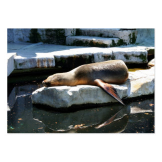A Seal Sleeping on a platform Large Business Cards (Pack Of 100)
