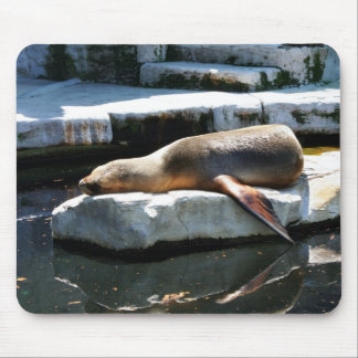 A Seal Sleeping on a platform Mouse Pad