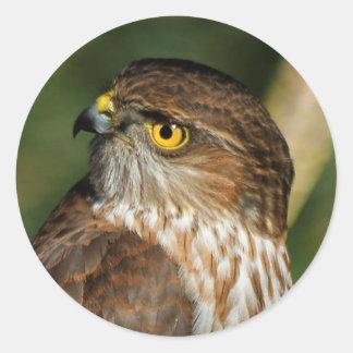 A Sharp-Shinned Hawk Comes A-Callin' Classic Round Sticker