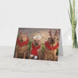 A Sharpei Christmas card