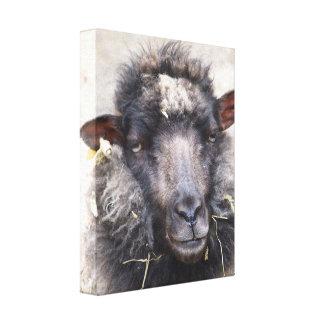 A Sheepish Portrait - Wrapped Canvas