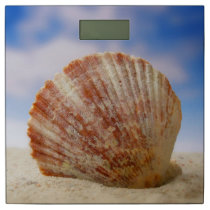 A Shell Propped In The Sand Bathroom Scale