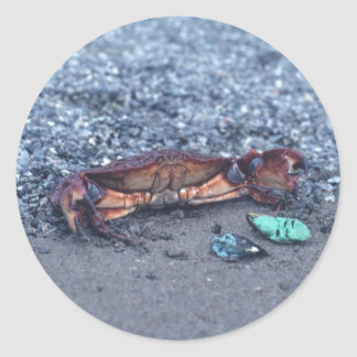 A Shore Crab Classic Round Sticker