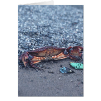 A Shore Crab Greeting Card