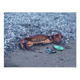 A Shore Crab Postcard