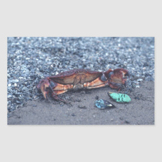 A Shore Crab Rectangular Sticker