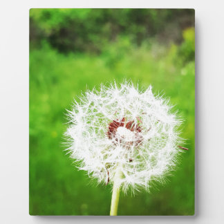 a simple wish plaque