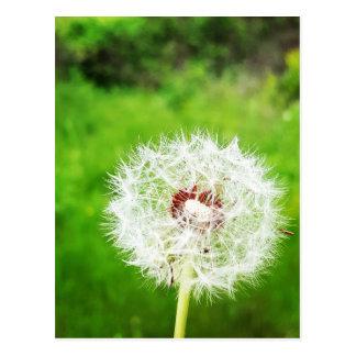 a simple wish postcard