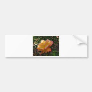 A single beautiful delicate rose bumper sticker