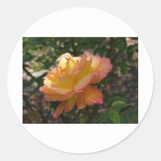 A single beautiful delicate rose photograph classic round sticker