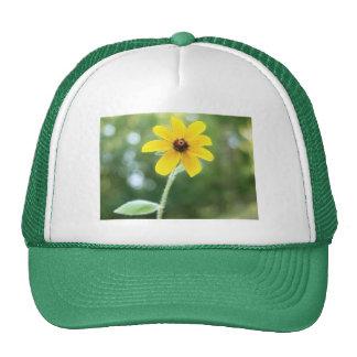 A Single Black Eyed Susan Trucker Hats