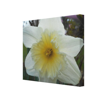 A Single Lovely Daffodil Wrapped Canvas