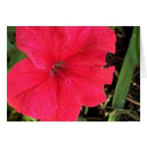 A Single pretty red petunia. Greeting Card