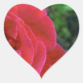 A Single Red Rose Heart Sticker