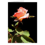 A single rose -a greeting cards