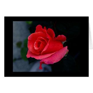 A Single Rose Stationery Note Card