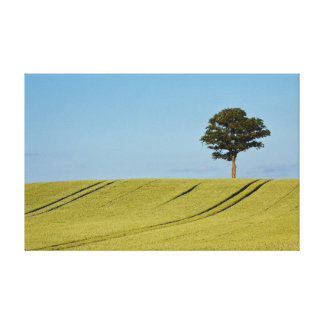 A single tree on a cornfield canvas print