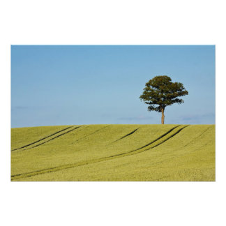 A single tree on a grain field photo print