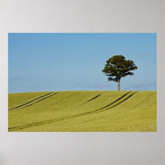 A single tree on a grain field poster