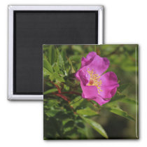 A Single Wild Rose Magnet