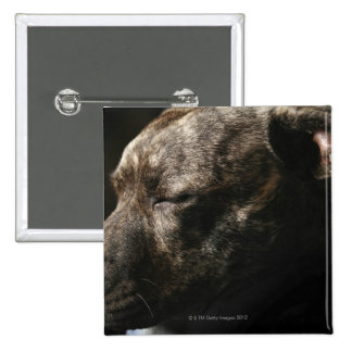 A sleeping pit bull dog 2 inch square button