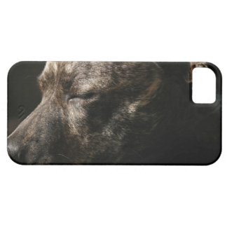 A sleeping pit bull dog iPhone 5 cases