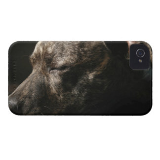 A sleeping pit bull dog iPhone 4 Case-Mate case