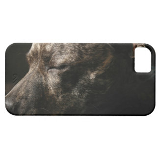 A sleeping pit bull dog iPhone 5 cover