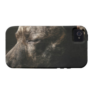 A sleeping pit bull dog iPhone 4 case