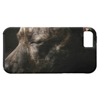 A sleeping pit bull dog iPhone 5 case