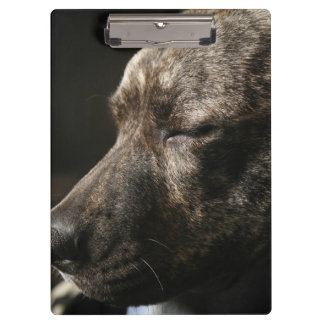 A sleeping pit bull dog clipboards