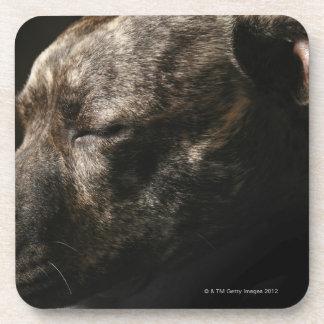 A sleeping pit bull dog coaster