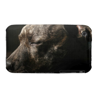 A sleeping pit bull dog iPhone 3 Case-Mate case
