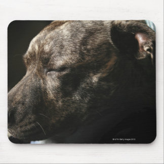 A sleeping pit bull dog mouse pad