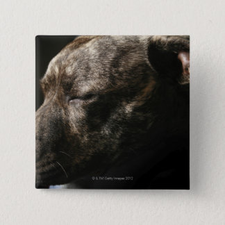 A sleeping pit bull dog pinback button