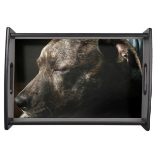 A sleeping pit bull dog service tray