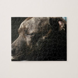 A sleeping pit bull dog jigsaw puzzle