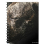 A sleeping pit bull dog spiral notebooks