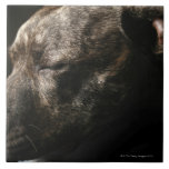 A sleeping pit bull dog tile