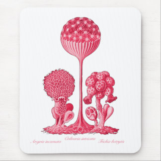 A Slime Mould Mouse Pad
