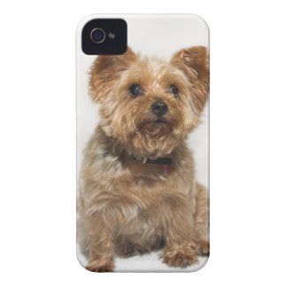 A small Dog iPhone4 Case-Mate Barely There iPhone 4 Cover