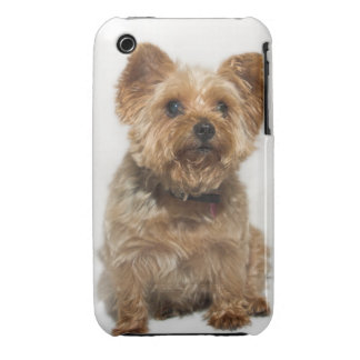 A small Dog iPhone 3 Case-Mate iPhone 3 Cover