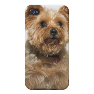 A small Dog iPhone 4 Case