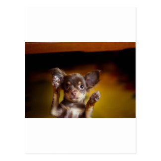 A small dog named Bosse Postcard