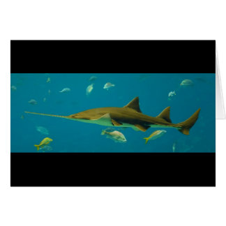 A Smalltooth Sawfish Pristis pectinata Card
