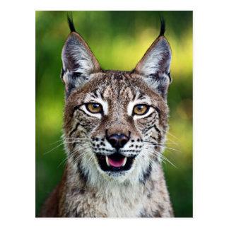 A Smiling Siberian Lynx Postcard