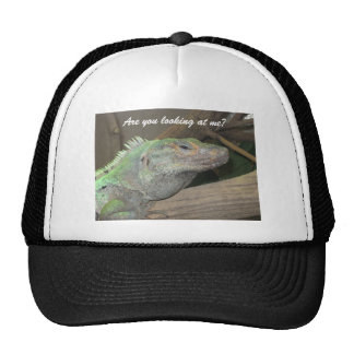 A smug lizard hat.  (Are you looking at me?)