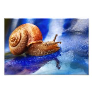 A Snails Pace Photographic Print