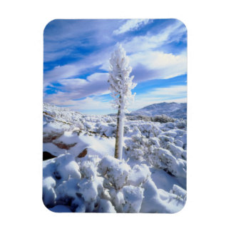 A snow covered yucca magnet