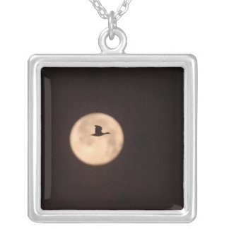 A Snow Goose Chen caerulescens) against the Square Pendant Necklace